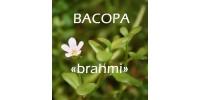 TISANE BIO BACOPA, «brahmi» / (Bacopa monnieri)