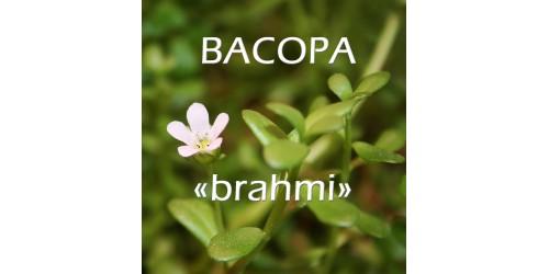 "ORGANIC HERB TEA BACOPA ""BRAHMI"" / (Bacopa monnieri)"