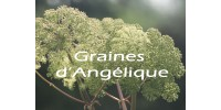 ORGANIC HERBAL TEA, ANGELICA  / Angelica archangelica /(Seeds)