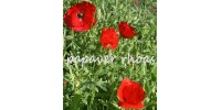 ORGANIC HERBAL TEA, POPPY (Papaver rhoeas)