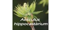 TISANE BIO MARRONNIER D'INDE (Aesculus hippocastanum)