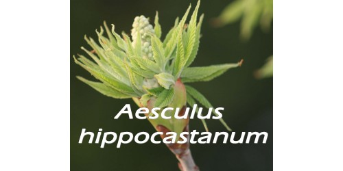 ORGANIC HERB TEA HORSE CHESTNUT (Aesculus hippocastanum)