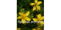 ORGANIC HERB TEA ST-JOHN'S WORT (hypericum perforatum)
