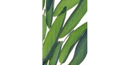 SAUGE bio séché (Fines herbes / VRAC SAC ZIP)