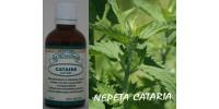 CATAIRE, Teinture bio, (Nepeta cataria)