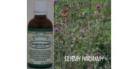 MILK  THISTLE, Organic tincture, (Silybum marianum)