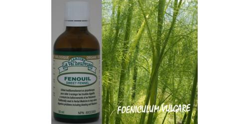 FENOUIL, Teinture bio, (Foeniculum vulgare)
