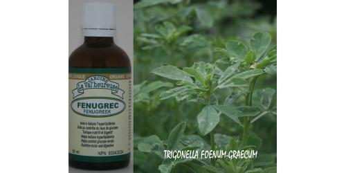 FENUGREC, Teinture bio, (Trigonella foenum-graecum)