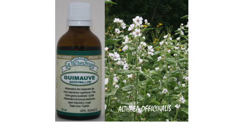 MARSHMALLOW,  organic tincture, (Althaea officinalis),