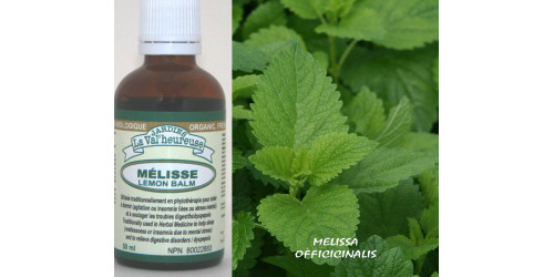 LEMON BALM, Organic tincture,  (Melissa officinalis)