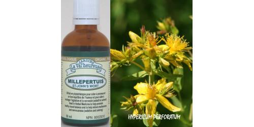 MILLEPERTUIS,  Teinture bio,  (Hypericum perforatum)