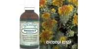 RHODIOLE, Teinture biologique,  Rhodiola rosea